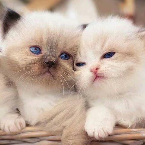 cats922