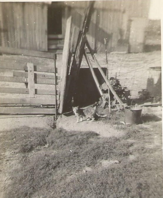 dads cat 1932